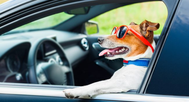 Dog-Friendly Road Trip