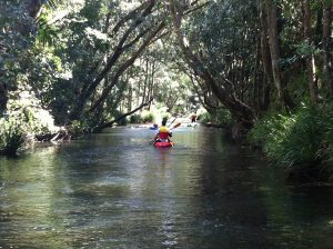 Orara River Paddle | Coffs Harbour Hinterland