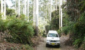 4WD Orara Escarpment | Coffs Harbour Hinterland