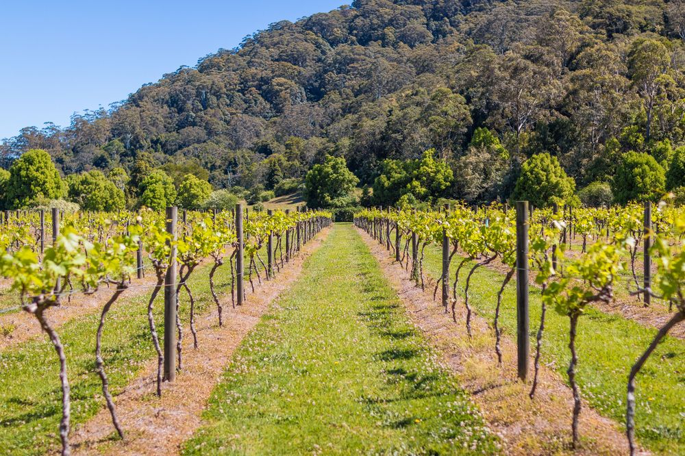 Vineyard | Friday Creek Retreat | Romantic Getaway Coffs Harbour