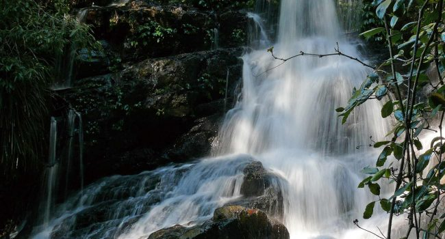 Bangalore Falls |Coffs Harbour Hinterland